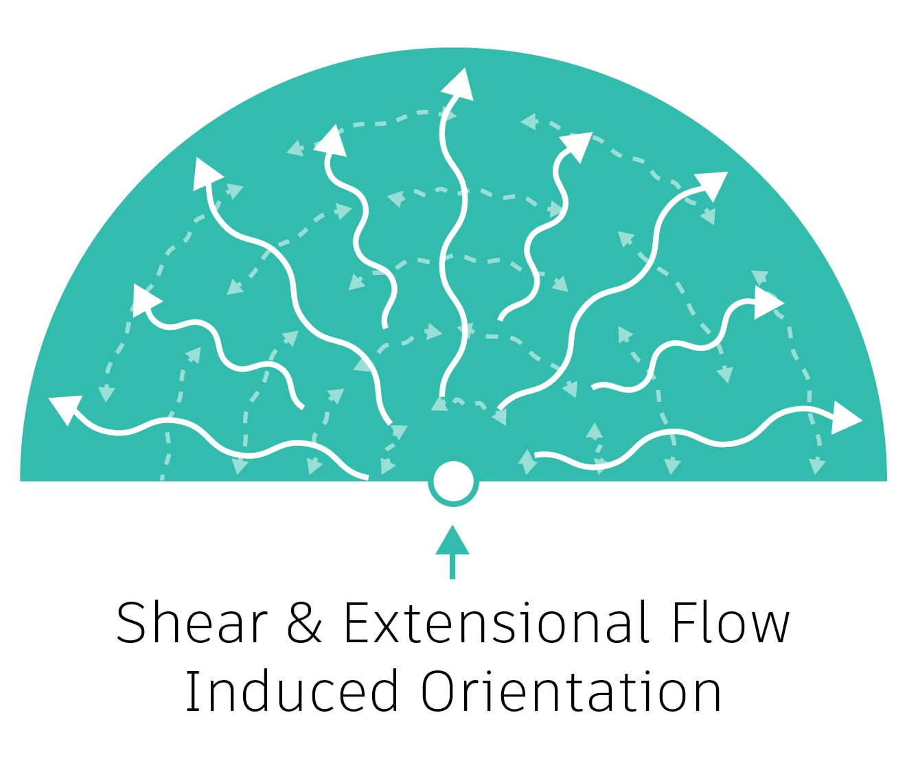 Shear and extensional flow-induced orientation