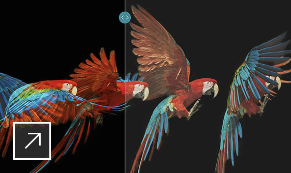 A series of 5 images of a red, blue, and yellow parrot flapping its wings with Dolby Vision logo in the top left