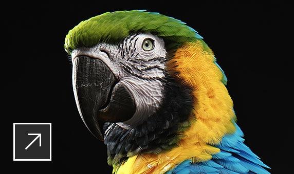 Попугай ара, смоделированный в Maya
