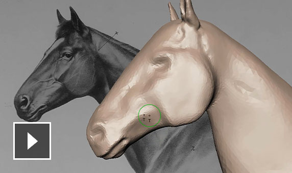 Video: Anatomical 3D model of a horse