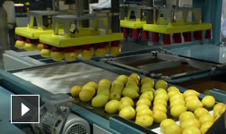 Video: Industrial Machinery case study––Sunkist
